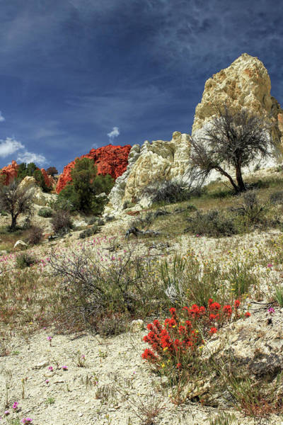 Photograph - Red Flowers At Red Rock Canyon by James Eddy