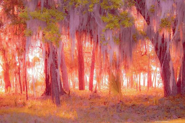 Photograph - Red Forest by Janal Koenig