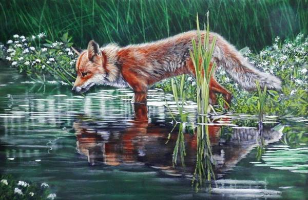 Painting - Red Fox Reflecting by John Neeve