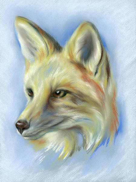 Pastel - Red Fox Portrait by MM Anderson