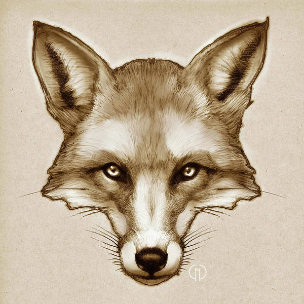 Woodland Animals Mixed Media - Red Fox Sketch by Catherine Noel