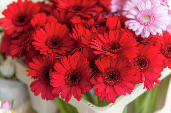 Rights-managed Wall Art - Photograph - Red Gerberas At Amsterdam Flower Market by Jenny Rainbow