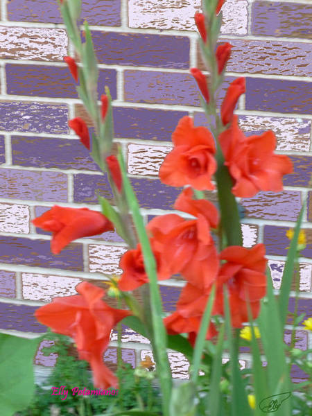 Pyrography - Red Gladiolas by Elly Potamianos