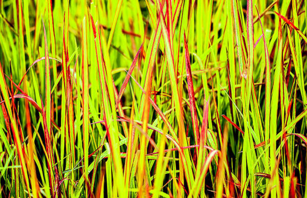 Red Green And Yellow Grass Art Print