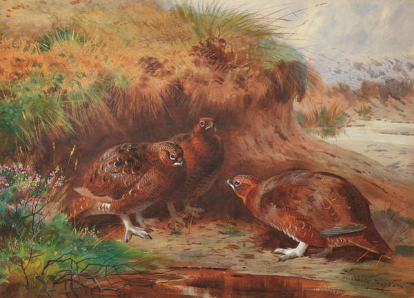 Wall Art - Painting - Red Grouse Beneath A Burn Bank by Archibald Thorburn