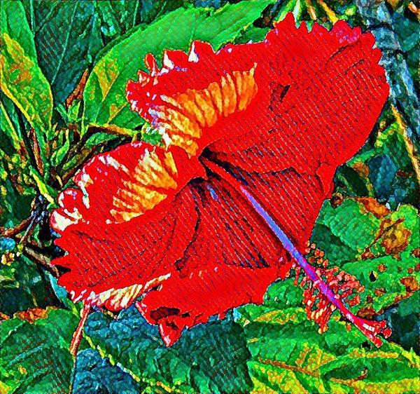 Red Hibiscus Aslant Art Print