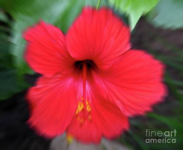 Photograph - Red Hibiscus Flower Macro Zoom Effect by Rose Santuci-Sofranko