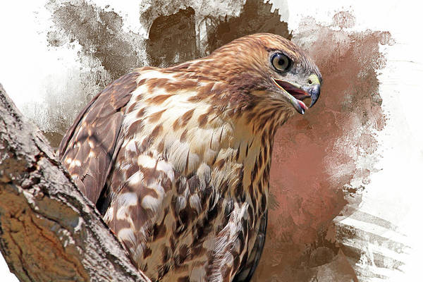 Red Tailed Hawk Photograph - Red Hot by Donna Kennedy
