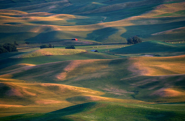 Palouse Photograph - Red In A Sea Of Green by Mike  Dawson