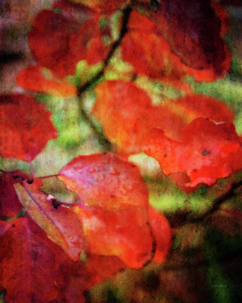 Photograph - Red In The Rain Leaves A Lasting Impression 7586 Idp_2 by Steven Ward