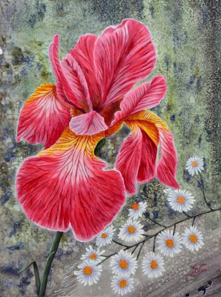 Photograph - Red Iris by Sam Davis Johnson