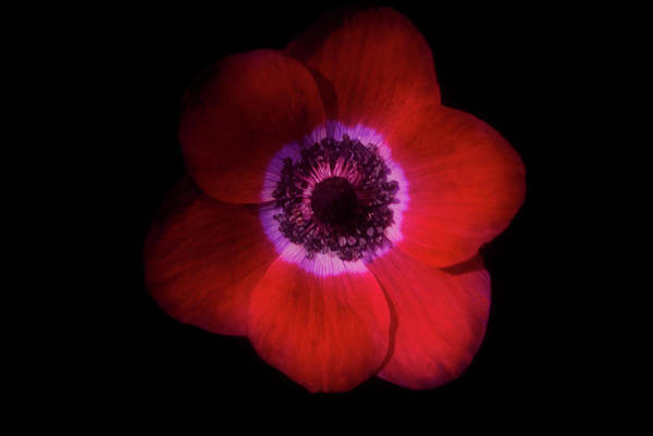 Photograph - Red Is The Colour Of This Flower by Cliff Norton
