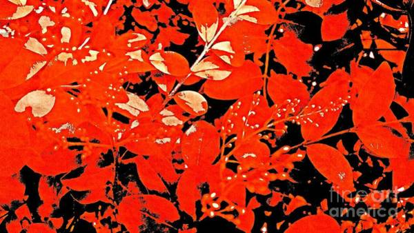 Photograph - Red  Lace by Rachel Hannah