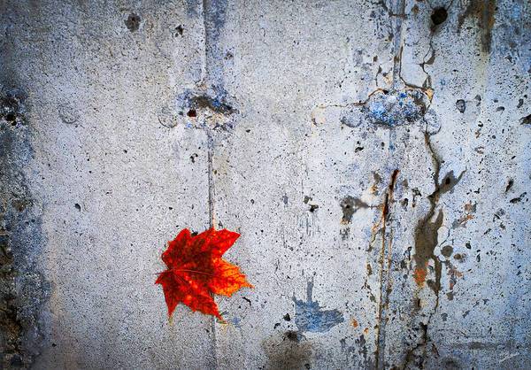 Photograph - Red Leaf by Donna Lee
