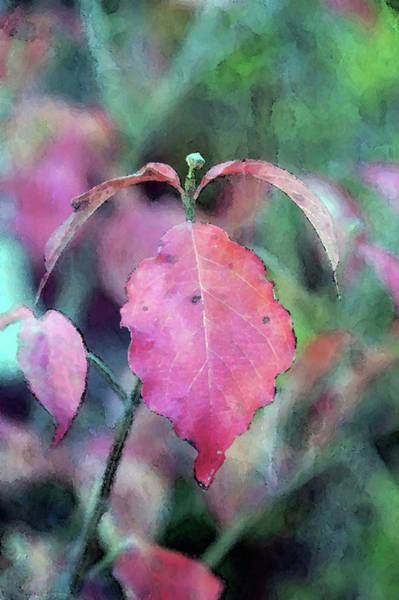 Photograph - Red Leaf Impression 6102 Dp_2 by Steven Ward