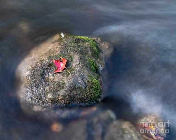 Photograph - Red Leaf by Phil Spitze