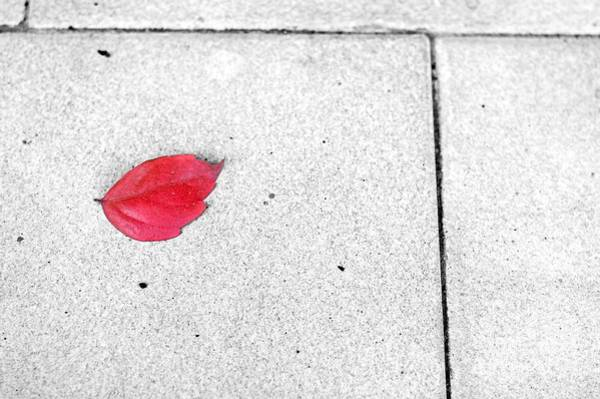 Wall Art - Photograph - Red Leaf by Silvia Ganora