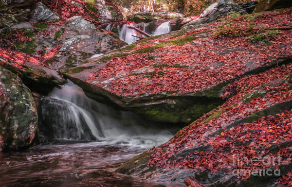 Photograph - Red Leaf Waterfall by Tom Claud