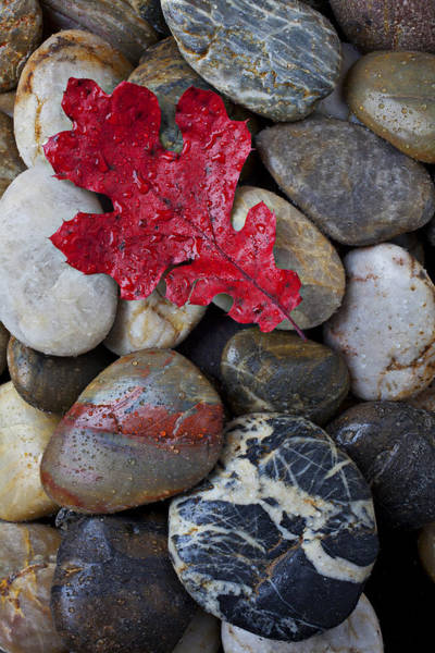 Mineral Wall Art - Photograph - Red Leaf Wet Stones by Garry Gay