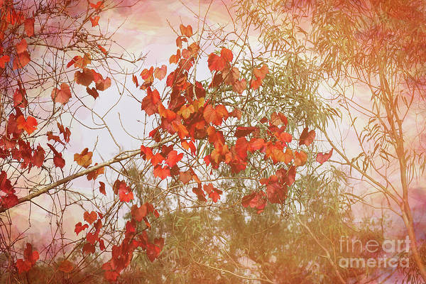 Photograph - Red Leaves And Gum Trees by Elaine Teague