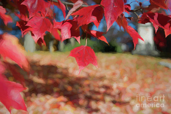 Digital Art - Red Leaves by Ed Taylor