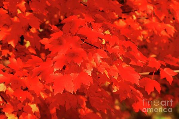 Wall Art - Photograph - Red Leaves by Gregory E Dean