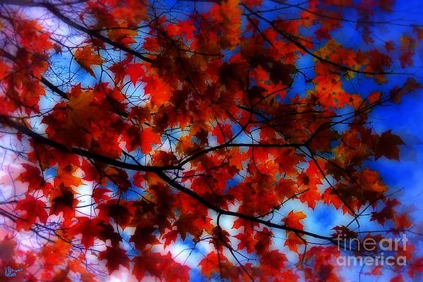 Photograph - Red Leaves by Jeff Breiman