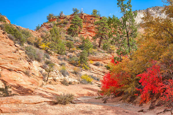 Photograph - Red Leaves Red Stone by John M Bailey