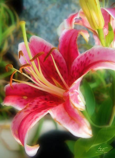 Photograph - Red Lily by Sam Davis Johnson