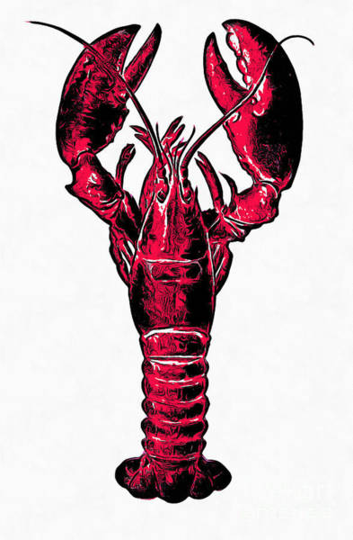 Cook Drawing - Red Lobster by Edward Fielding