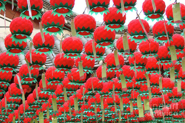 Wall Art - Photograph - Red Lotus Lanterns In Seoul by Delphimages Photo Creations