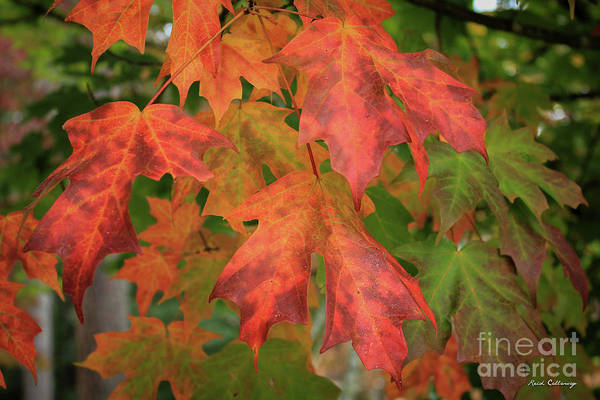 Photograph - Red Maple Eye Magnets Fall Leaf Art by Reid Callaway