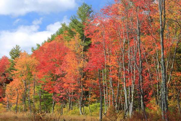 Rutland Photograph - Red Maple Wetland In Autumn by John Burk
