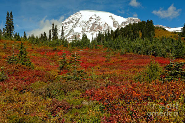 Mt. Adams Photograph - Red Meadows At Paradise by Adam Jewell