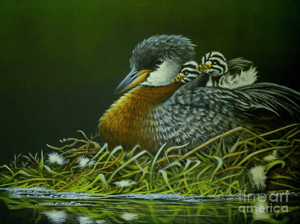 Painting - Red Necked Grebe by Greg and Linda Halom