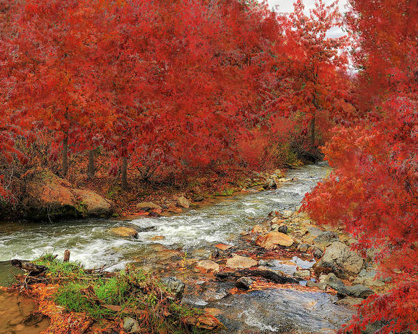 Photograph - Red Oak Creek by Scott Cordell