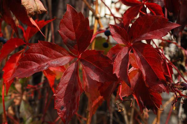 Photograph - Red October by David Matthews