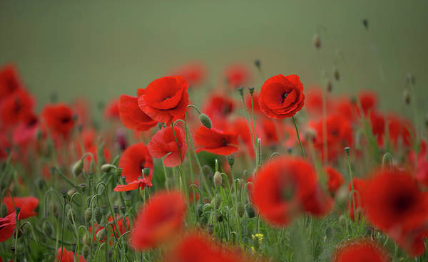 Photograph - Red On Green by Peter Walkden