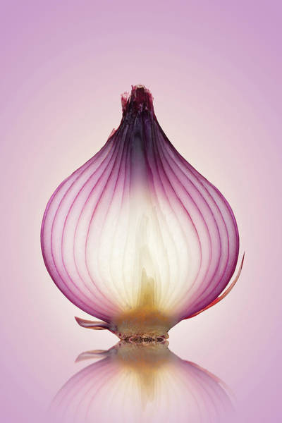 Peel Photograph - Red Onion Translucent Layers by Johan Swanepoel