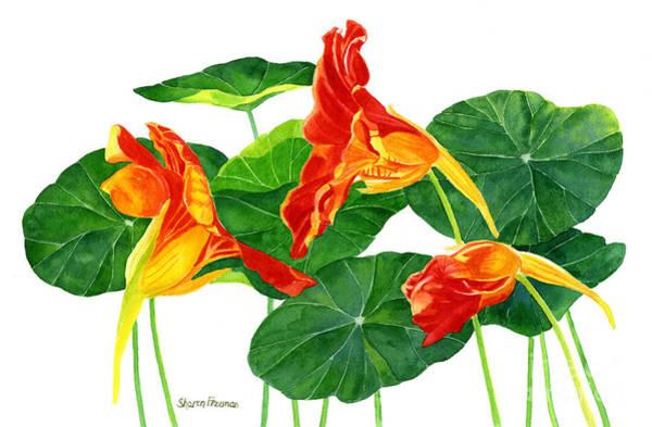Nasturtiums Wall Art - Painting - Red Orange Nasturtiums With Leaves by Sharon Freeman
