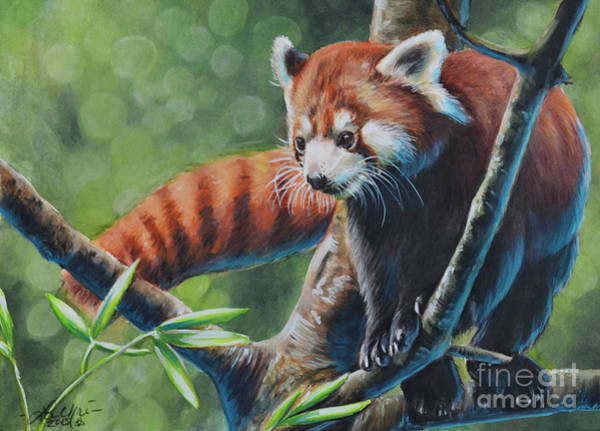 Painting - Red Panda by Lachri