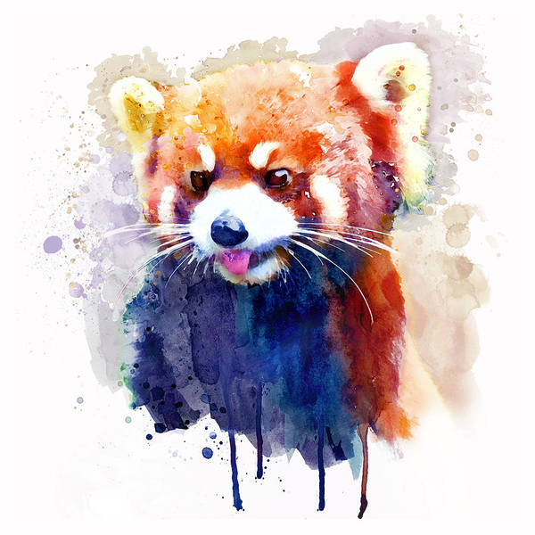 Wall Art - Painting - Red Panda Portrait by Marian Voicu