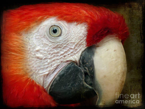 Digital Art - Red Parrot by Angela Doelling AD DESIGN Photo and PhotoArt