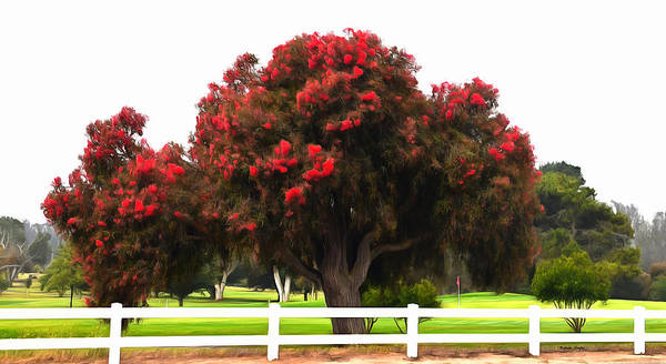 Photograph - Red Pin Under A Red Tree Morro Bay Golf Course  by Barbara Snyder