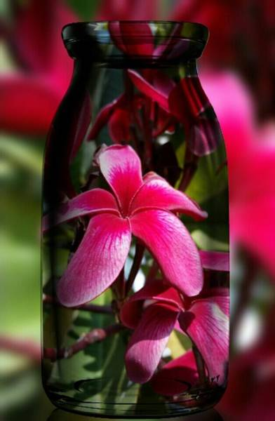 Photograph - Red Plumeria's In A Bottle by Pamela Walton