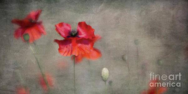 Wall Art - Photograph - Red Poppies by Priska Wettstein