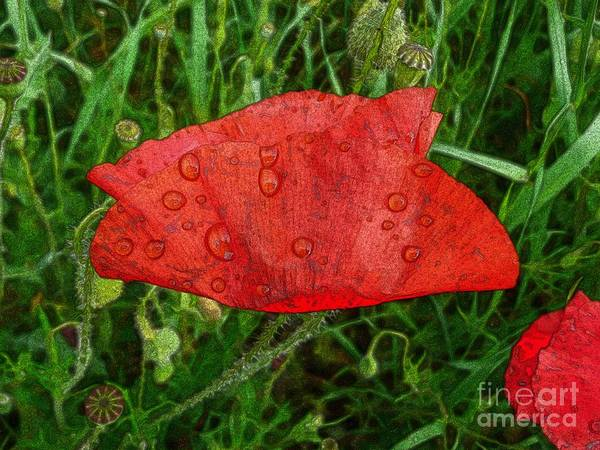 Photograph - Red Poppy Flower 4 by Jean Bernard Roussilhe