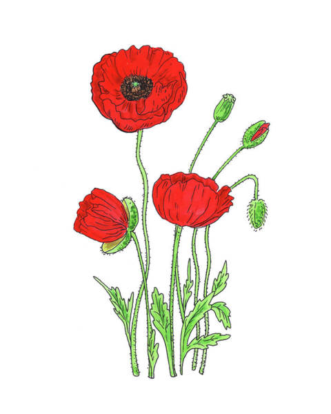 Botanic Painting - Red Poppy Flower Watercolor  by Irina Sztukowski