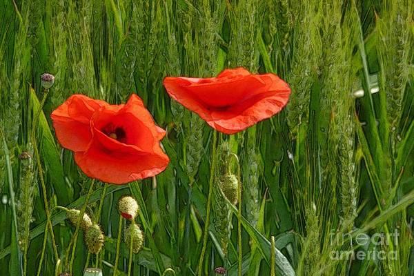 Red Poppy Flowers In Grassland 2 Art Print