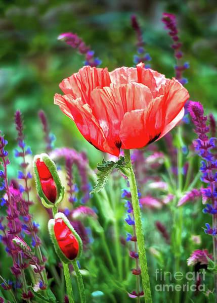 Wild Poppies Digital Art - Red Poppy Summer by Gabriele Pomykaj